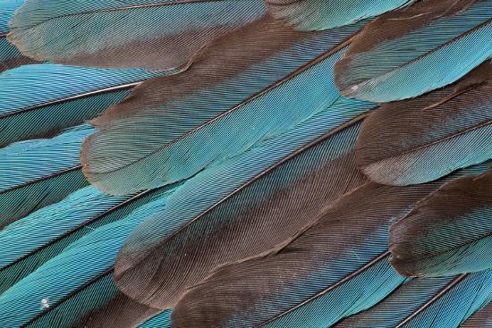 darrell-gulin-kingfisher-wing-feathers