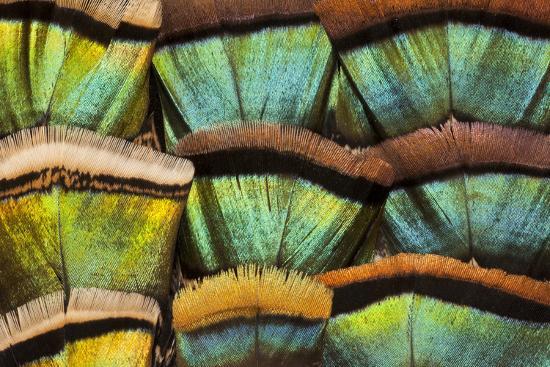 darrell-gulin-oscillated-turkey-feather-pattern