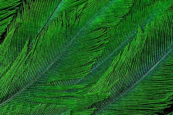 darrell-gulin-resplendent-quetzal-green-tail-feathers-in-layered-feather-design-from-costa-rica