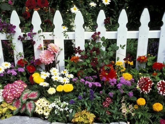 darrell-gulin-white-picket-fence-and-flowers-sammamish-washington-usa