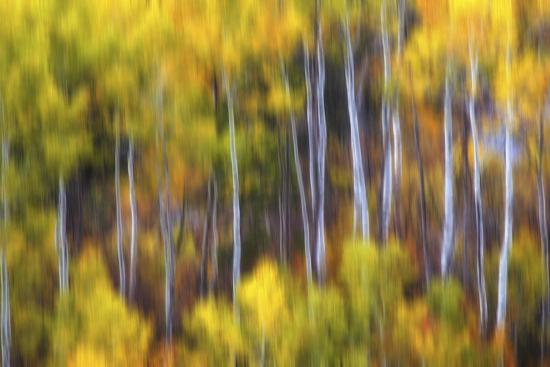 darren-white-photography-aspens-alive