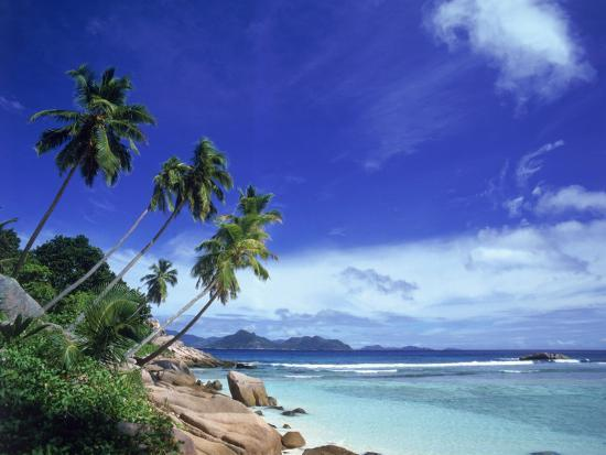 david-ball-palm-trees-and-ocean-la-digue-seychelles
