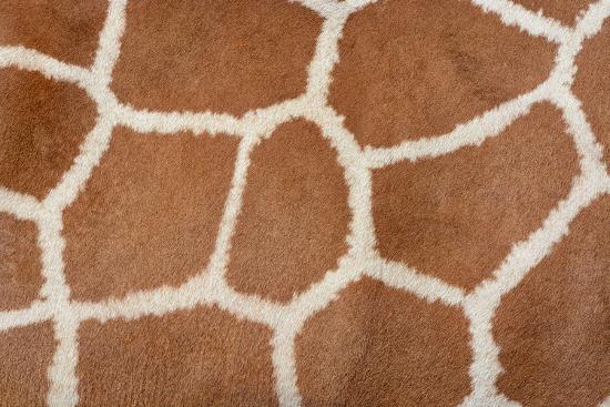 david-carillet-animal-skin-background-of-the-patterned-fur-texture-on-an-african-giraffe