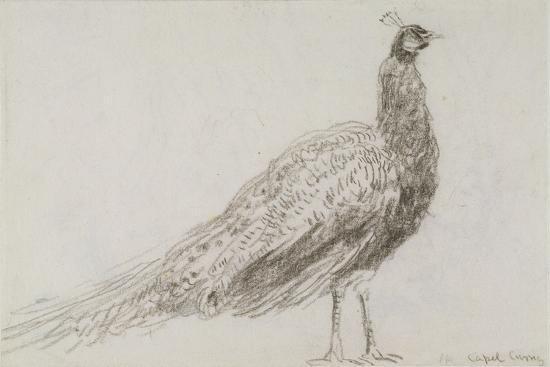 david-cox-peacock-at-capel-curig-c-1845