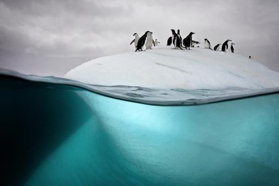 david-doubilet-chinstrap-penguins-on-an-ice-floe-off-the-coast-of-dank-island