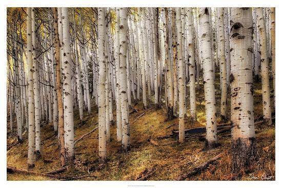 david-drost-aspen-woods