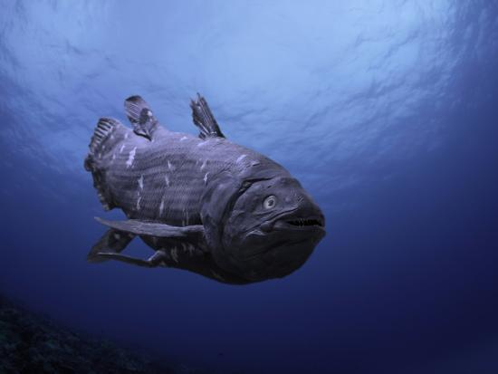david-fleetham-digital-illustration-of-coelacanth-that-was-believed-to-have-become-extinct