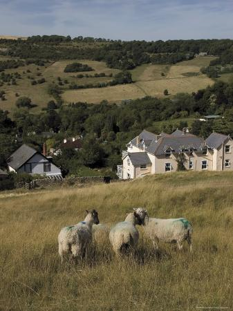 david-hughes-sheep-woodmancote-village-viewed-from-cleeve-hill-the-cotswolds-gloucestershire-england