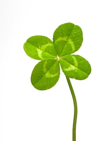 david-nunuk-four-leaf-clover