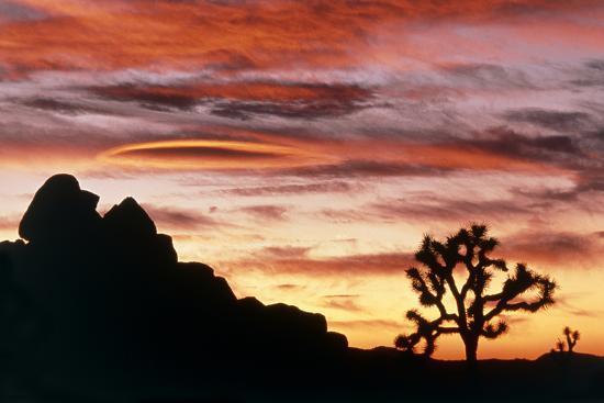 david-nunuk-lenticular-cloud-joshua-tree-nm-sunset