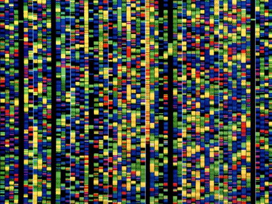 david-parker-computer-screen-showing-a-human-genetic-sequence