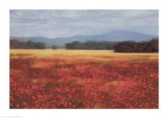 david-schock-french-poppy-fields