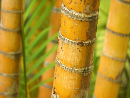 david-wall-bamboo-stems-queensland-australia