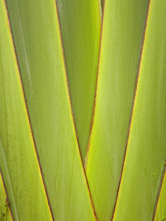 david-wall-palm-frond-pattern-coral-coast-viti-levu-fiji-south-pacific