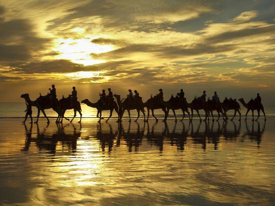 david-wall-tourist-camel-train-on-cable-beach-at-sunset-broome-kimberley-region-western-australia