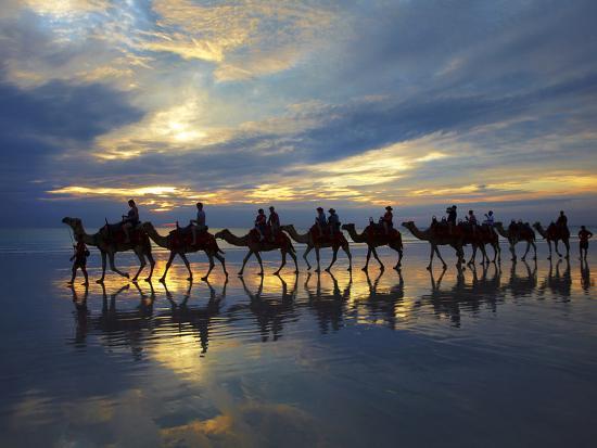 david-wall-tourist-camel-train-on-cable-beach-at-sunset-broome-kimberley-region-western-australia