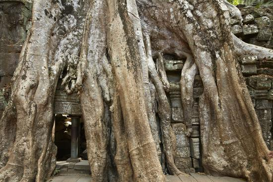 david-wall-tree-roots-growing-over-ta-prohm-temple-ruins-angkor-world-heritage-site-siem-reap-cambodia