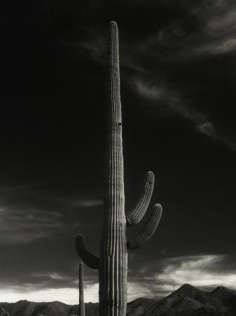david-wasserman-cactus-in-capitol-reef-national-park-utah