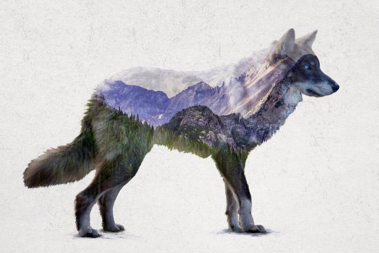 davies-babies-rocky-mountain-grey-wolf