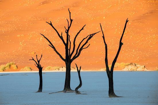 dead-trees-in-a-desert-dead-vlei-sossusvlei-namib-desert-namib-naukluft-national-park-namibia