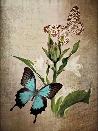 debra-van-swearingen-butterfly-botanical-ii