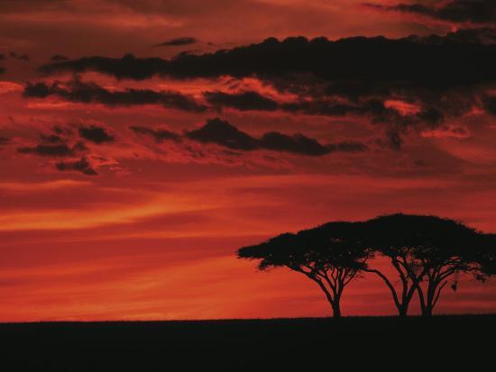 dee-ann-pederson-sunset-on-acacia-tree-serengeti-tanzania