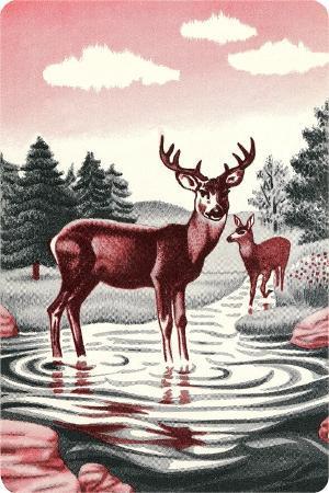 deer-in-stream