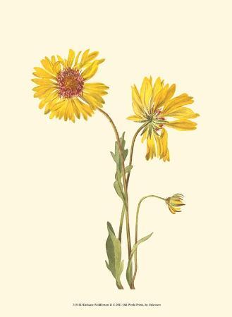 delicate-wildflowers-ii