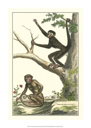 denis-diderot-coaita-and-sajou-monkeys