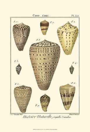 denis-diderot-cone-shells-pl-333