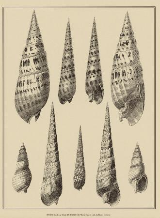 denis-diderot-shells-on-khaki-ix