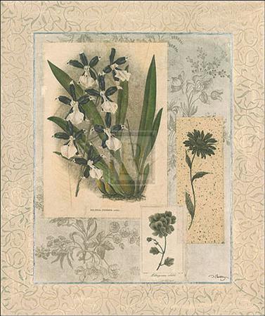 dennis-carney-histoire-du-orchid-vi