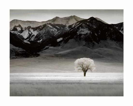 dennis-frates-solitary-tree