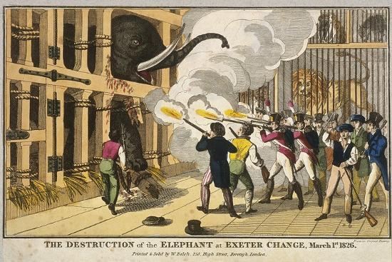 destruction-of-the-furious-elephant-at-exeter-change-1826