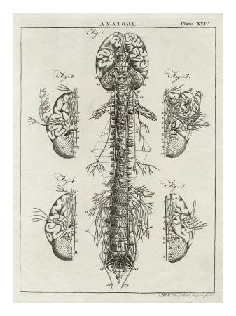 detailed-diagram-of-the-brain-and-spine