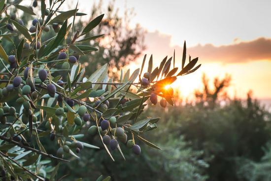 deyan-georgiev-olive-trees-on-sunset-sun-rays
