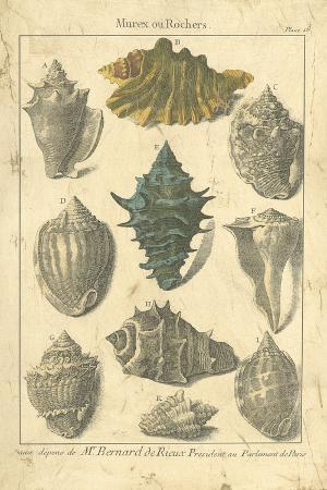dezallier-seaside-treasures-ii
