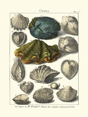 dezallier-seaside-treasures-iv