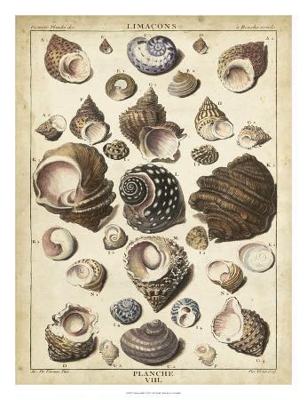 dezallier-turban-shells