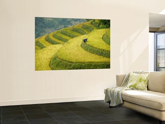 diana-mayfield-black-h-mong-woman-in-rice-field-terraces-near-tafen-village