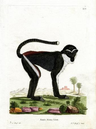 diana-monkey