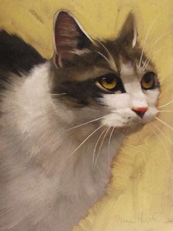diane-hoeptner-derby-cat