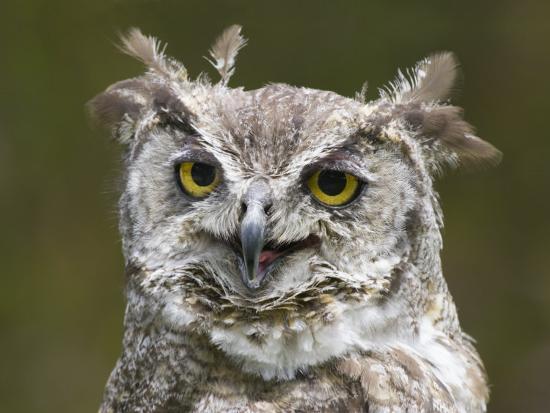 diane-miller-close-up-of-an-owl