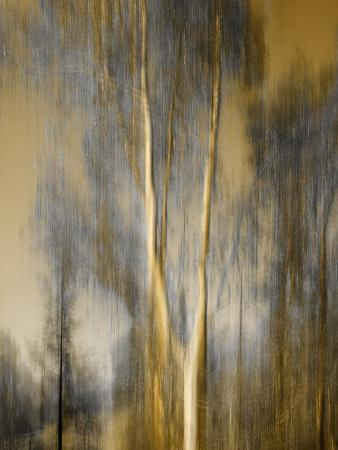diane-miller-composited-image-of-trees