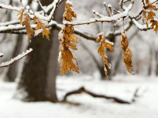 diane-miller-leaves-and-snow-yosemite-california