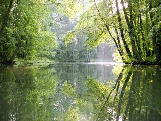 diane-miller-spreewald-canal-reflection-an-area-of-old-canals-in-woods