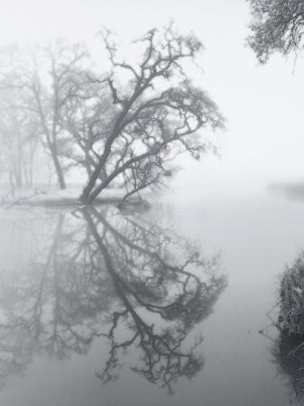 diane-miller-trees-amidst-fog