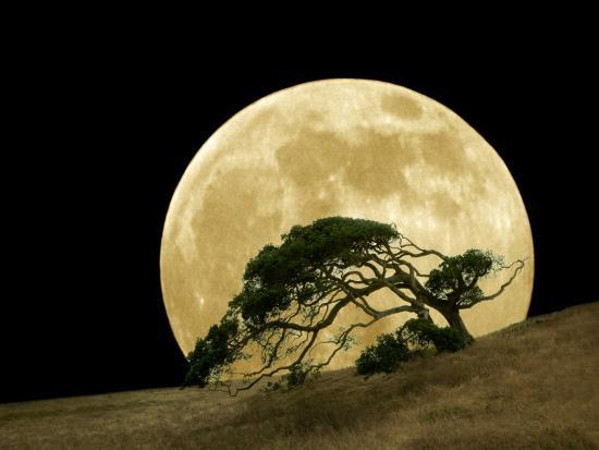 diane-miller-windswept-live-oak-tree-and-rising-full-moon-at-night