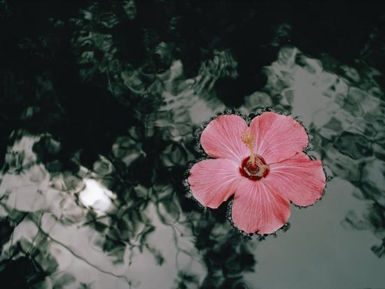 dick-durrance-hibiscus-flowers