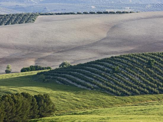 diego-lezama-olive-fields-share-space-with-other-crops